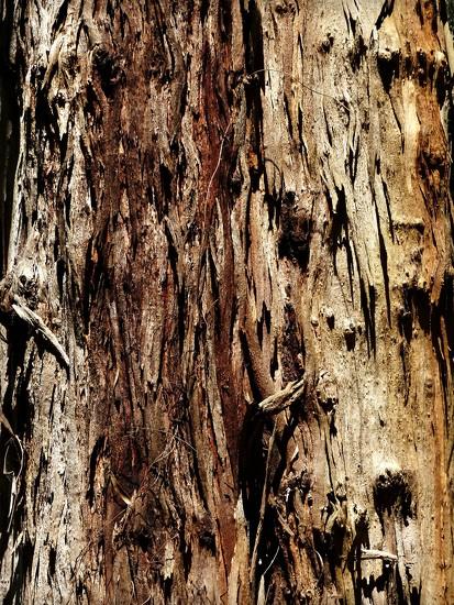 Tree Bark by judithdeacon