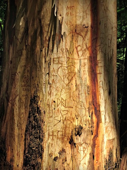 Tree Grafitti by judithdeacon