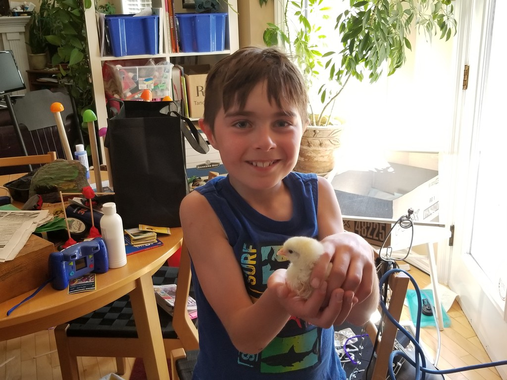 Baby Chick by schmidt