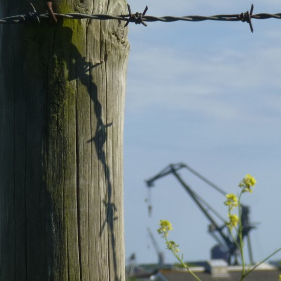 Post, Wire, Rapeseed and OUR Crane by 30pics4jackiesdiamond