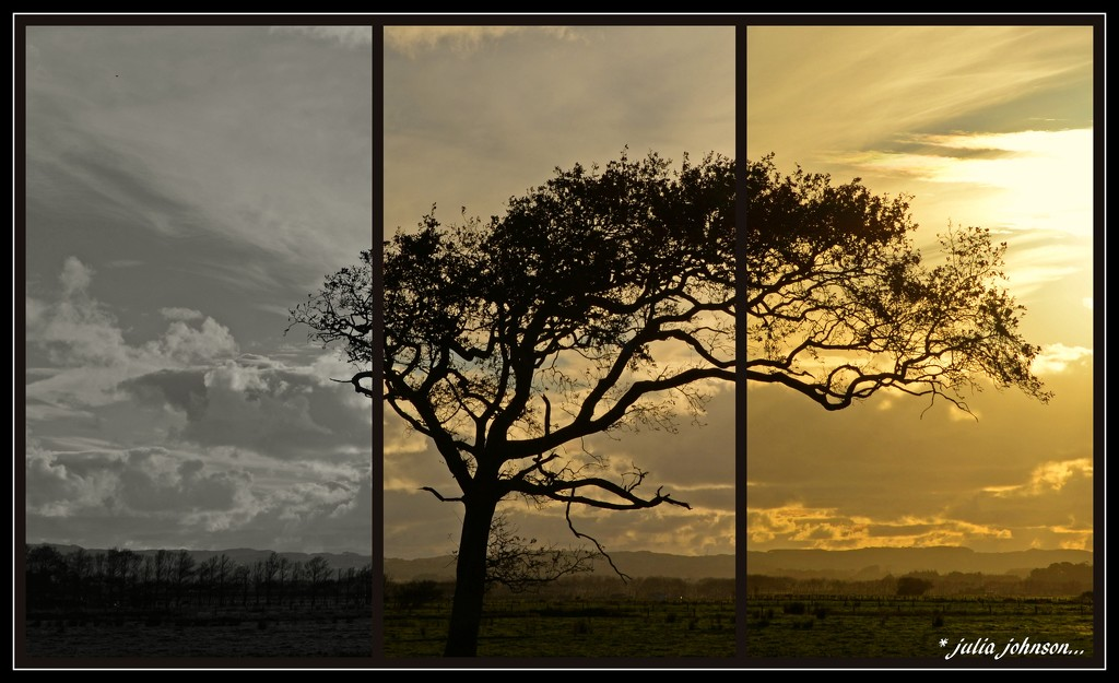 Sunset Oak... Triptych .. by julzmaioro