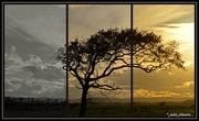 15th May 2018 - Sunset Oak... Triptych ..