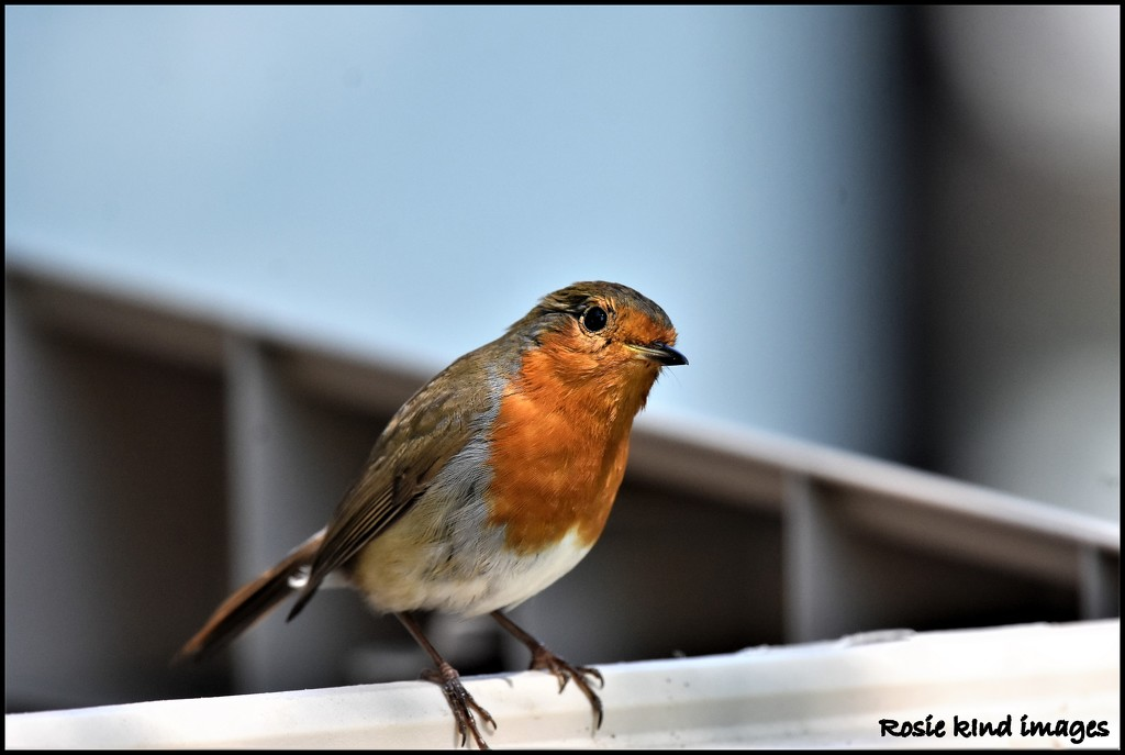 Aren't you going to get the suet pellets out again? by rosiekind