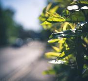 13th May 2018 - hedge half