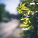 hedge half