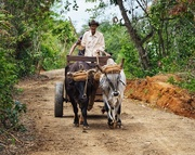7th May 2018 - The morning commute in Viñales