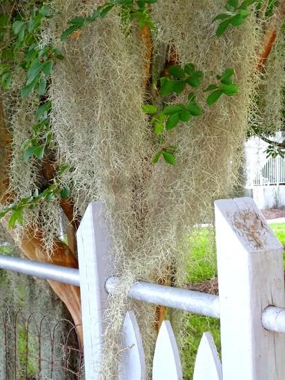 Moss  by dmdfday