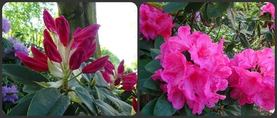 buds and flowers by gijsje