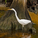 Egret on the Prowl! by rickster549