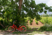 13th May 2018 - Taanayel bicycle