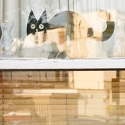 14th May 2018 - Half & half - Black cat