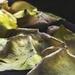 Decay 5 - Petals