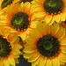 Happy artificial sunflowers