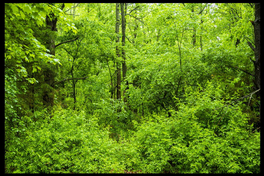 Green by hjbenson