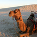 Waiting for the Sunset Camel Ride by onewing