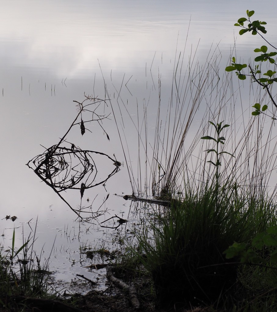Salvador Dali Fish...or Twig Reflection? by s4sayer
