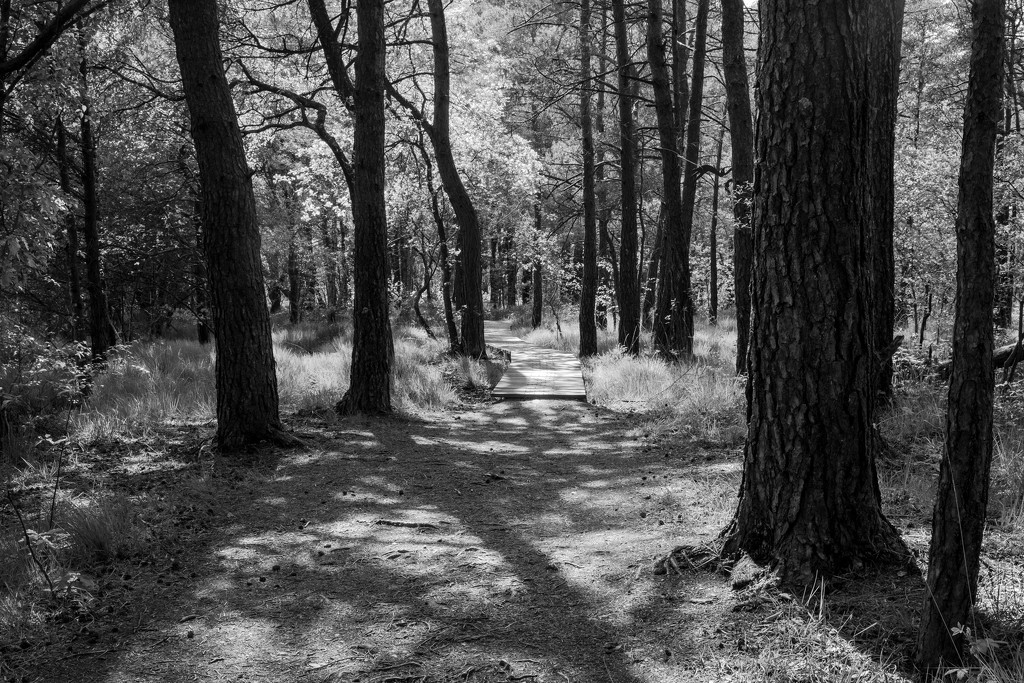 Paimpont 2018: Day 114 - Wooden Walkway... by vignouse