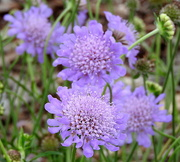 18th May 2018 - Purple pretties