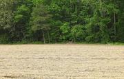 15th May 2018 - Half and half farm field