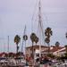 Masts at the marina