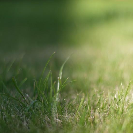 Sunlight on a Blade of Grass by 30pics4jackiesdiamond