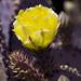 Purple cactus 3