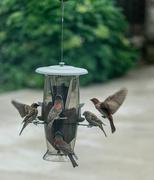 18th May 2018 - Feeding Frenzy
