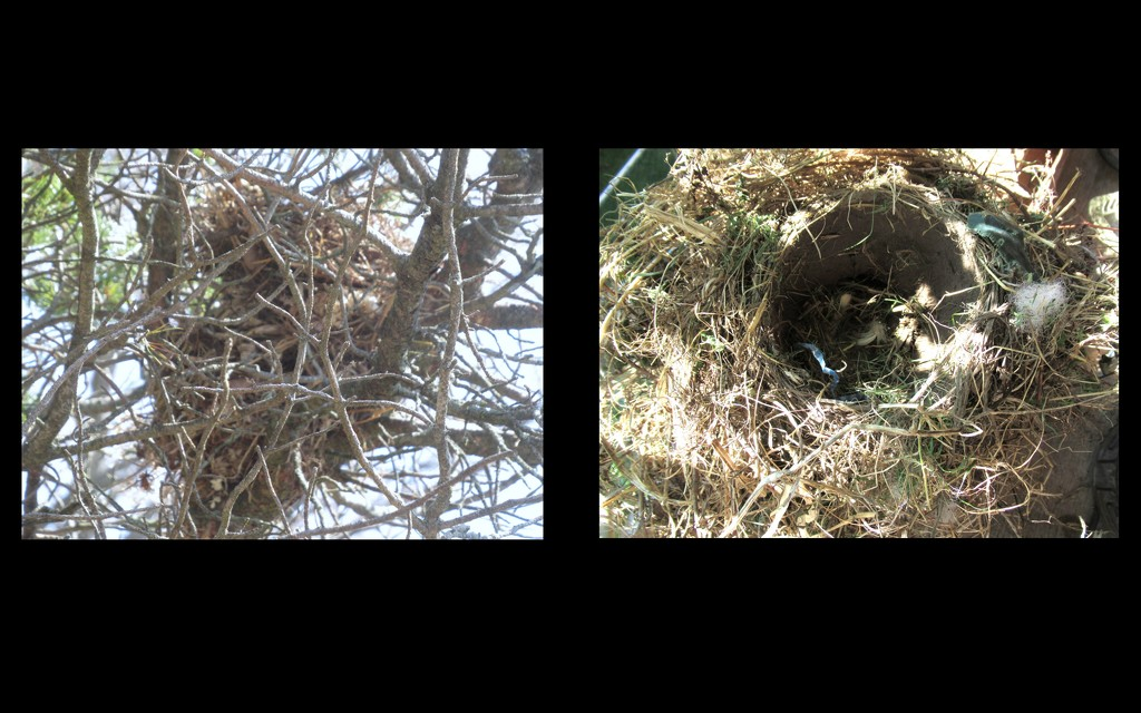 Two nests by bruni