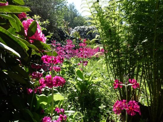in the American garden..... by quietpurplehaze