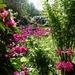 in the American garden.....