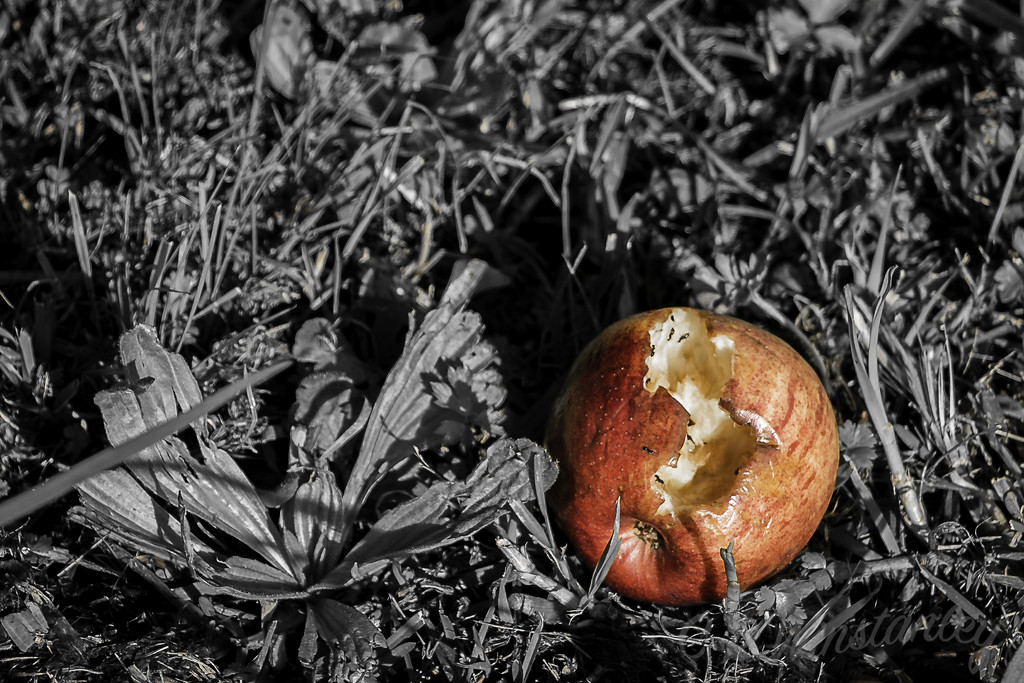 Decay 6 - Discarded Apple by kipper1951