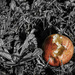 Decay 6 - Discarded Apple