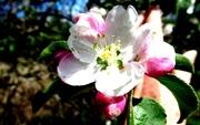 21st May 2018 - Beautiful blossom