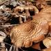 Green Lake Mushrooms