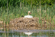 21st May 2018 - What a big nest you've got!