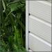 May Half'n'Half #20: Ferns