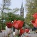 Tulip History