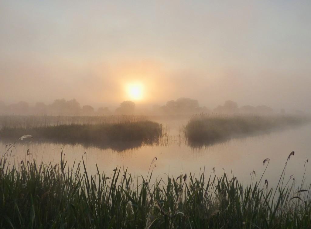 Misty dawn by julienne1