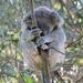 Bullet by koalagardens