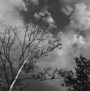 22nd May 2018 - Clouds and Trees
