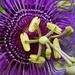 Purple Flower Up Close!