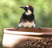 """22nd May 2018 - """"It's Mine! All Mine!"""", said the Woodpecker to no one in particular."""