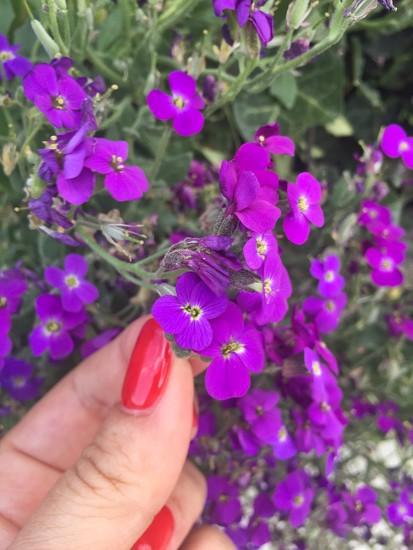 Purple.  by cocobella