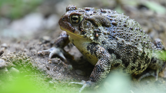 Toad by vera365