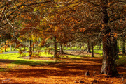 24th May 2018 - Autumn colours