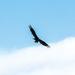 May Words - Bird