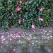 May Half'n'Half #21: Camellia