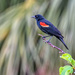 Red Winged Black Bird by danette