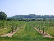 24th May 2018 - Somerset orchard