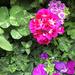 Dianne's Flowers